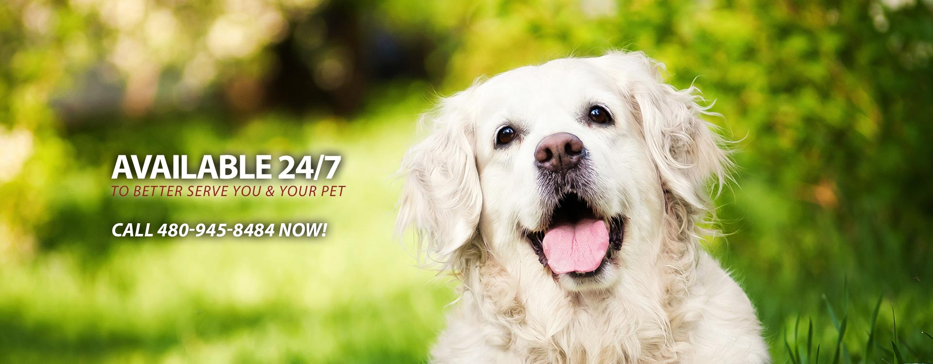 24 Hour Chandler Veterinary Service